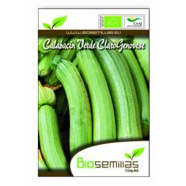 Semillas Ecológicas de Calabacin Verde Claro Genovese